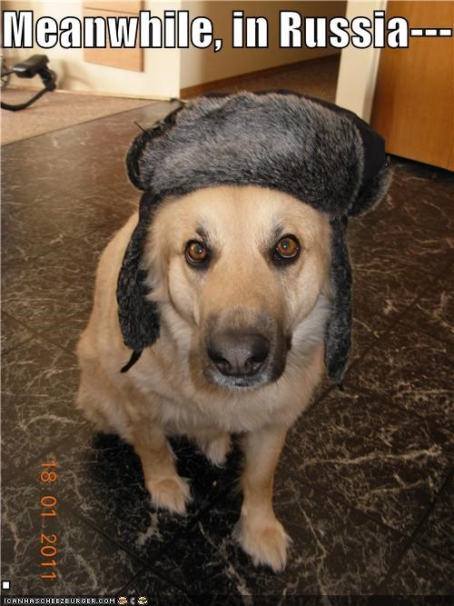 hat labrador Meanwhile russia russian wearing - 4586441984