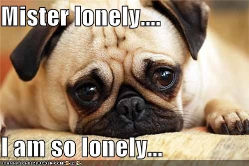 alone lonely mister pouting pug puppy eyes Sad