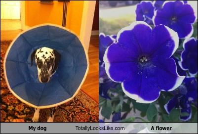 animals,cone of shame,dogs,flowers