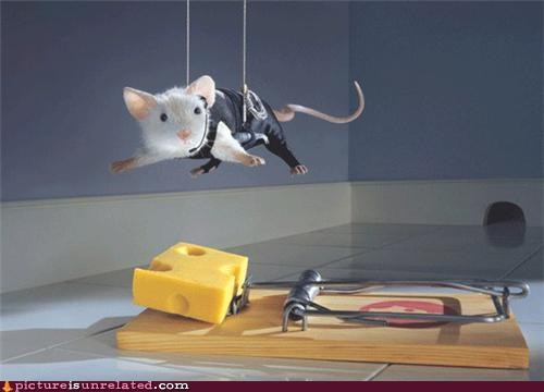 cheese good idea mouse trap