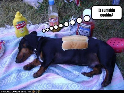 Cheezburger Image 4586705664