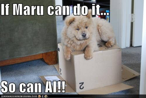 box,chow,chow chow,determined,explanation,if,maru,puppy,so can i,then