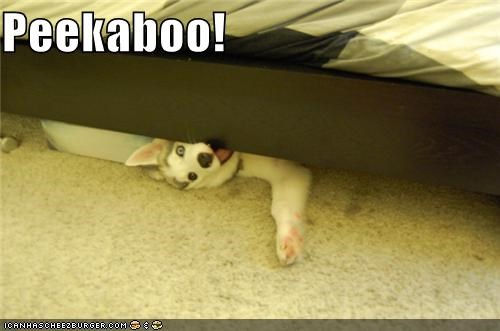 bed,best of the week,frame,Hall of Fame,hiding,husky,i has a hotdog,peekaboo,peeking,puppy,surprise,under