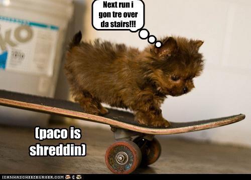 Next run i gon tre over da stairs!!! (paco is shreddin)
