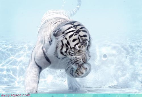 acting like animals breath holding joke laugh must not resisting stupid swimming tiger underwater upset - 4587076608