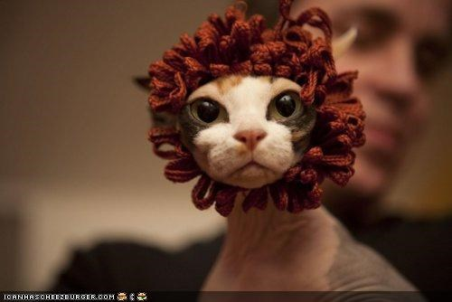 au natural big eyes cyoot kitteh of teh day dressed up lion sphynx yarn