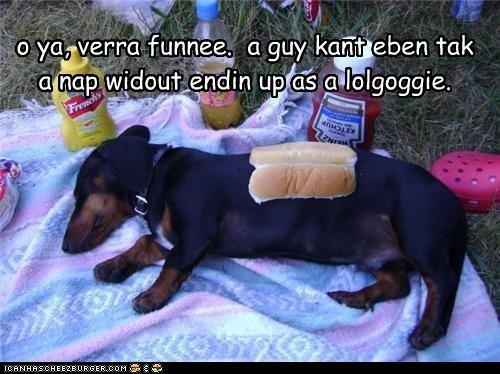 Cheezburger Image 4587357952