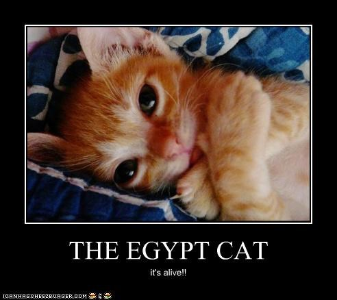 THE EGYPT CAT it's alive!!