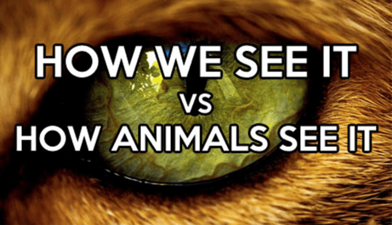 how we see it versus how animals see it