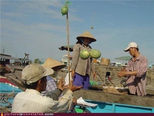 boobies bras melons - 4588153600