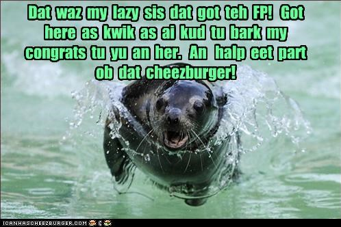 Cheezburger Image 4588354304