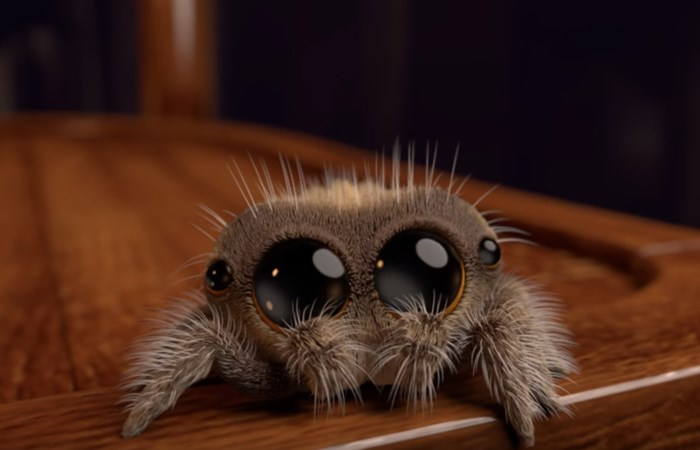 animation spider lucas Video - 4588805