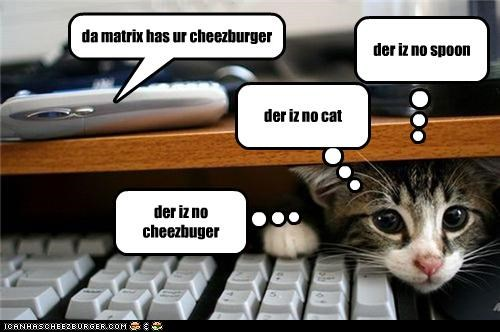 Cheezburger Image 4588918528