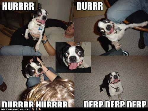 boston terrier comic crazy crazy eyes derp derpface panel paneled panels