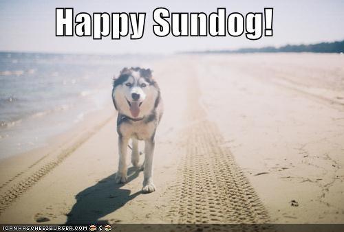 beach happy happy sundog husky smiling sun Sundog sunny walking - 4589254144