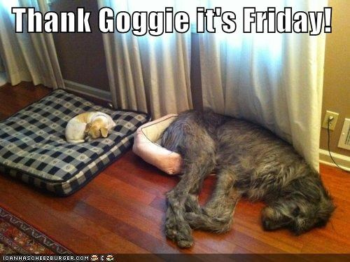 asleep,beagle,beds,best of the week,irish wolfhound,mismatched,sleeping,thank-goggie-its-friday,trade,trading