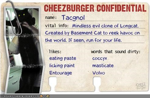 cheezburger confidential,story,tacgnol
