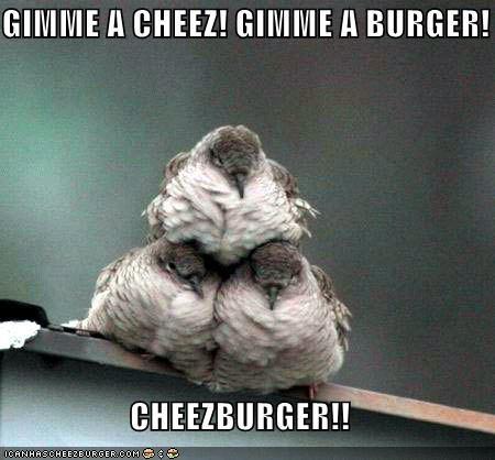 Cheezburger Image 4589801728