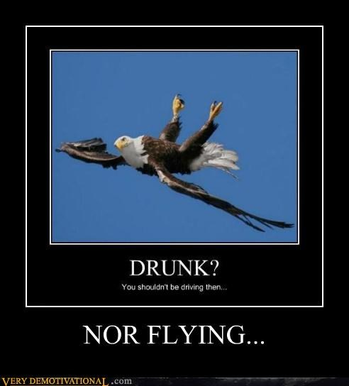 drunk,eagle,nor flying