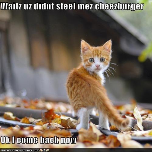 Cheezburger Image 4590115840