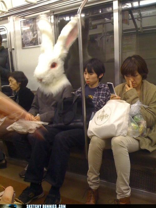bunny head costume mass transit really - 4590544128