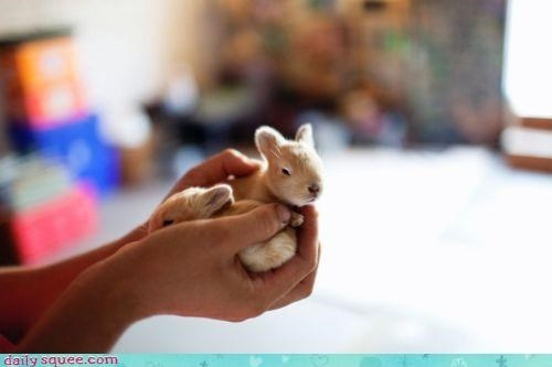 baby,Bunday,bunnies,bunny,hand,happy,happy bunday,holding,itty bitty,tiny,two