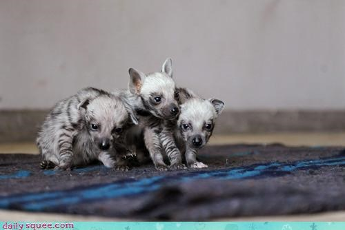 adorable Babies baby changing creepy cub cubs hyena hyenas opinion - 4590637312