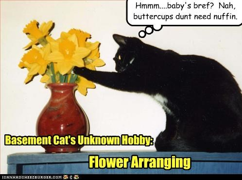 arrangement arranging basement cat caption captioned cat Flower hobby Unknown