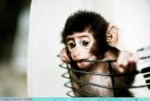 adorable,baby,basket,chewing,gumming,love,monkey,nomming,protective