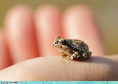 envy expression feeling french frog grenouille itty bitty language prince rhyming - 4590861568