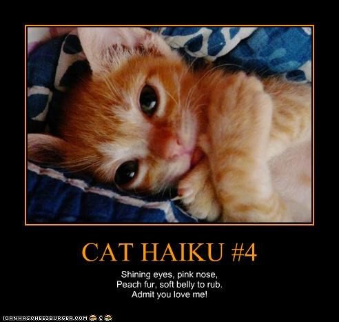 CAT HAIKU #4 Shining eyes, pink nose, Peach fur, soft belly to rub. Admit you love me!
