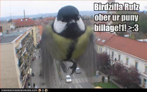 Cheezburger Image 4591792128