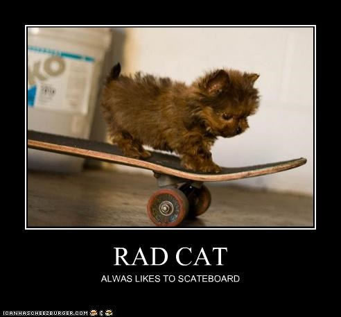 RAD CAT ALWAS LIKES TO SCATEBOARD