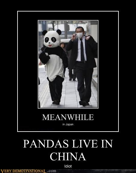 PANDAS LIVE IN CHINA Idiot