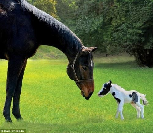 Adorable Animal adorbz einstein horseh