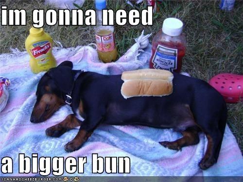 Cheezburger Image 4592959488