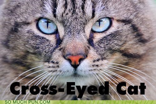cat,cross,cross eyed,double meaning,eyes,literalism,photoshop