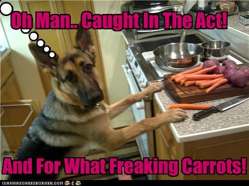 Cleverness Here Oh Man.. Caught In The Act! And For What Freaking Carrots!