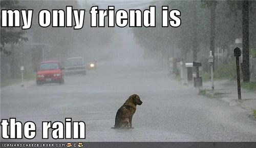 alone dogs friend Sad - 4595026688