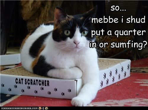 caption,captioned,cat,cat scratcher,confused,idea,maybe,money,put,quarter,toy