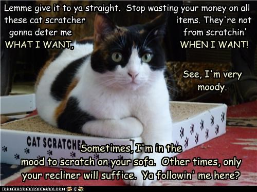 Lemme give it to ya straight. Stop wasting your money on all these cat scratcher items. They're not gonna deter me from scratchin' WHAT I WANT, WHEN I WANT! WHAT I WANT, WHEN I WANT! Sometimes, I'm in the mood to scratch on your sofa. Other times, only your recliner will suffice. Ya followin' me here? See, I'm very moody.