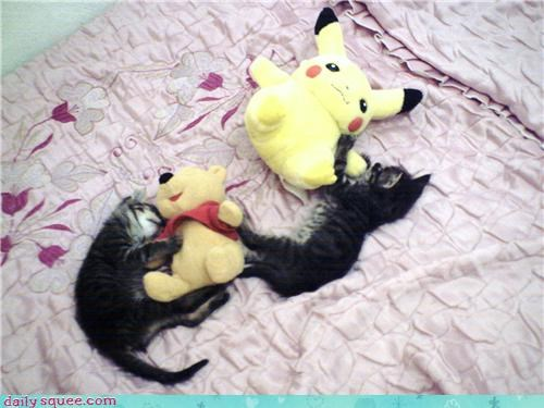 asleep,better,cat,Cats,icons,kitten,reader squees,sleeping,stuffed animals