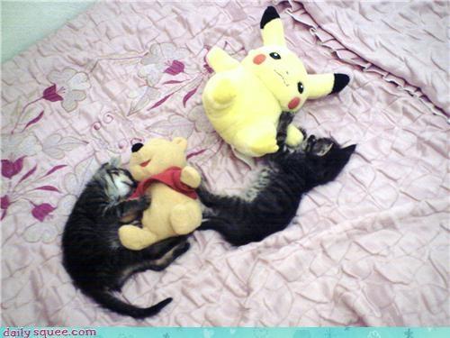 asleep better cat Cats kitten reader squees sleeping stuffed animals - 4596099840