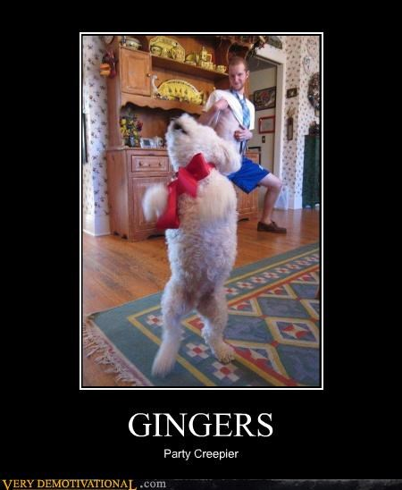 dogs,ginger,wtf