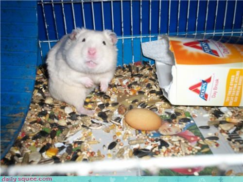 coincidence denial denying diet hamster indignant reader squees rescue - 4596777728