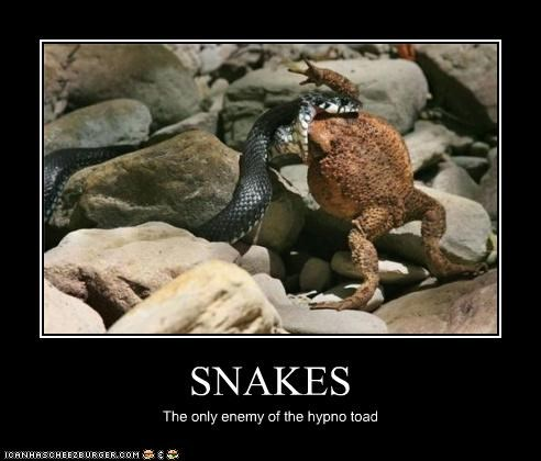 SNAKES The only enemy of the hypno toad