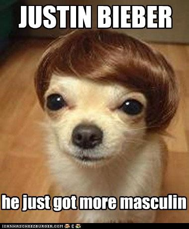 dogs justin bieber masculine - 4597601024
