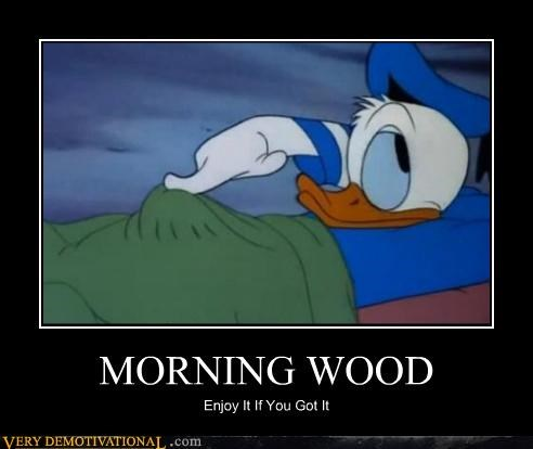 cartoons,donald duck,morning wood