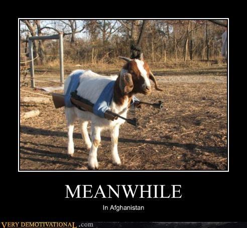 afghanistan goat guns Meanwhile - 4597840896