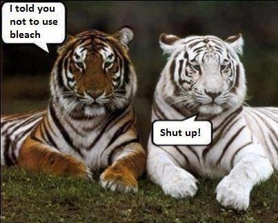 funny tiger memes